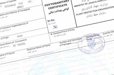Foreign Phytosanitary Certificate